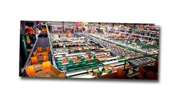 mercado-industrial-aritmos-fruits-de-ponent